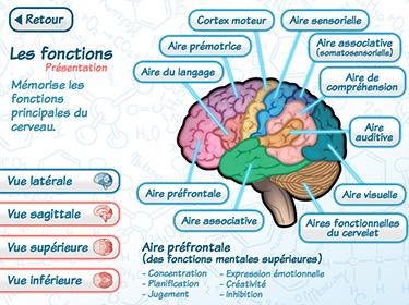 Aperçu de l'application : Le cerveau